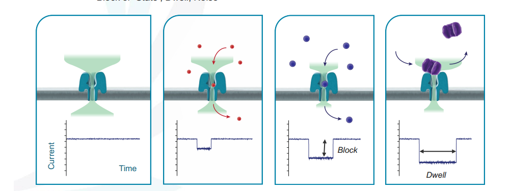 Why is nanopore sequencing difficult? | Omic frontiers